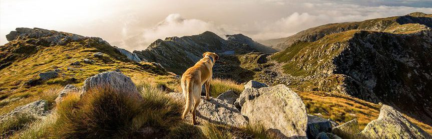 Trained dog on hilltop.